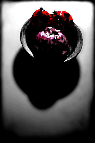 Cell Phone Camera Manipulated Art Doug Heslep
