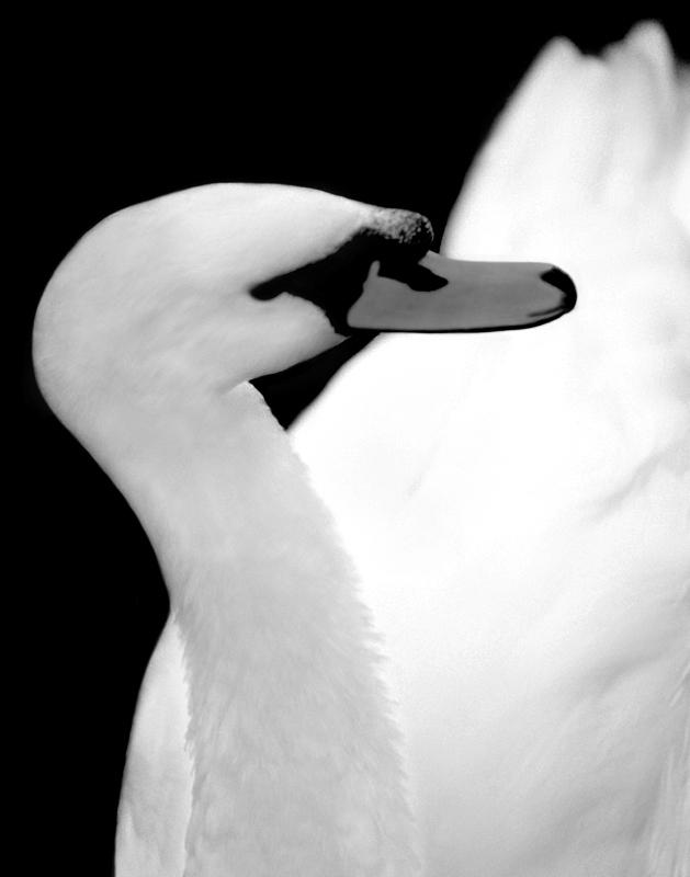 Wildlife Photography by Doug Heslep